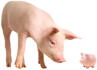pigs2.png
